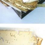 Preservación y organización del conjunto de documentos Juízo dos Orfaos