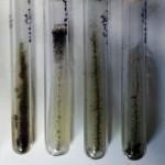 Determinación de la actividad celulolítica